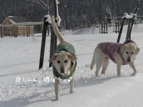 3_20121119194159.jpg