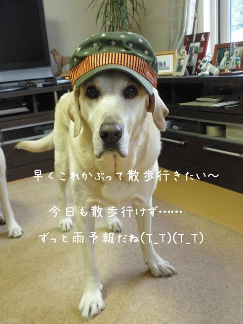4_20121010213409.jpg