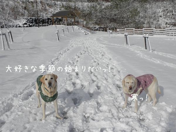 4_20121119194159.jpg