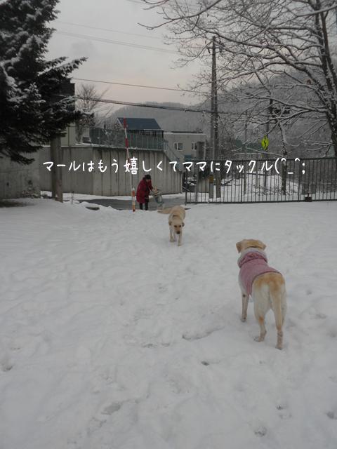 4_20121130210130.jpg