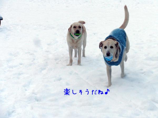 5_20121130215745.jpg
