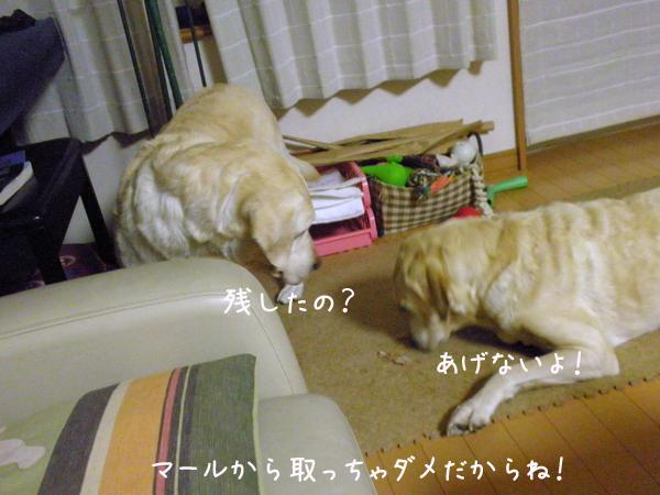 6_20121112204152.jpg