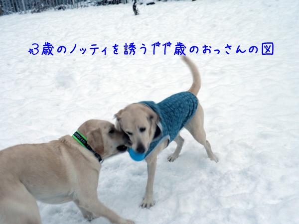 6_20121130210612.jpg