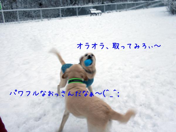 7_20121130210618.jpg
