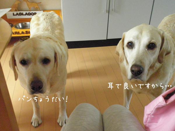 PAN_20120909210137.jpg