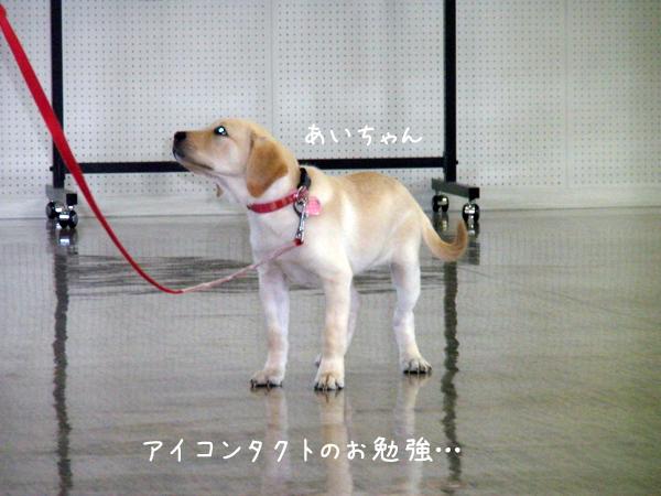 ai1_20120923190027.jpg