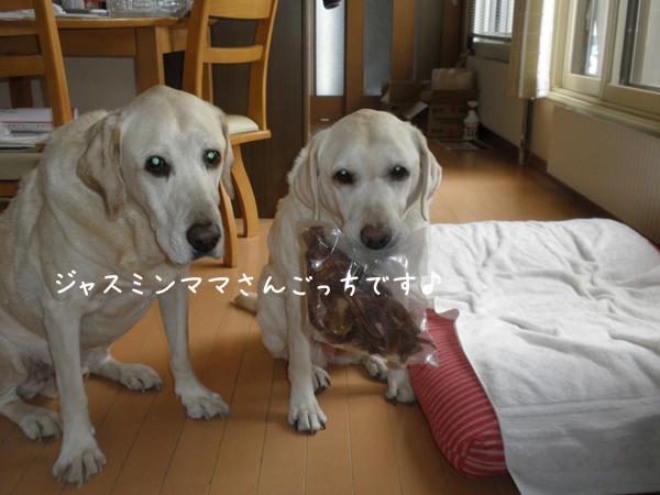 akiresu2_20121125202016.jpg