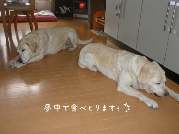 akiresu3.jpg