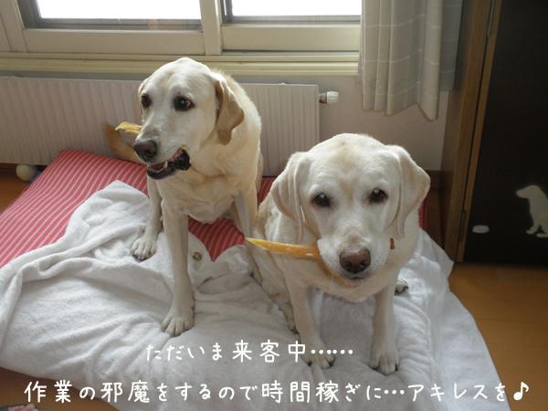 akiresu_20121226220415.jpg