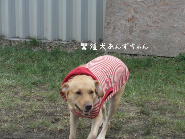 anzu1_20121018210026.jpg