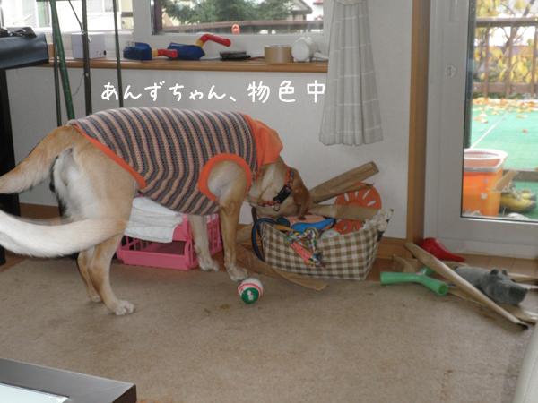 anzu1_20121116200052.jpg