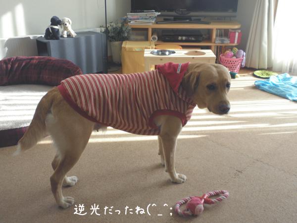 anzu3_20121015213418.jpg