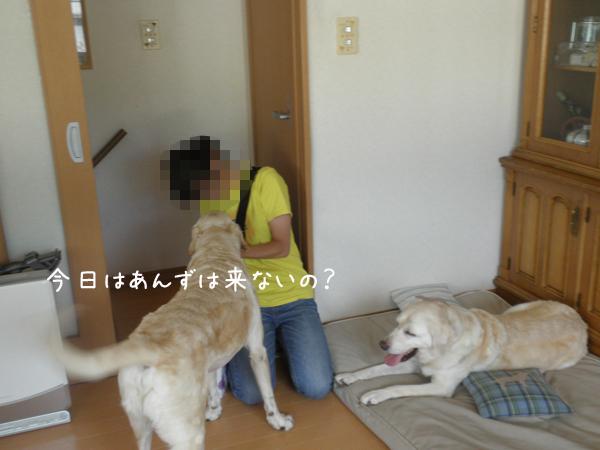 anzu_20120808212325.jpg