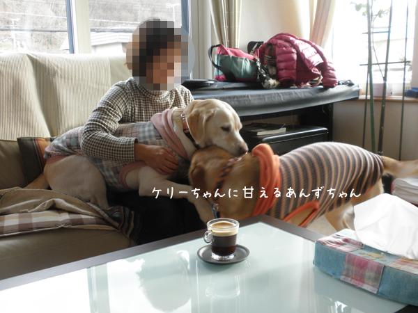 anzukeri_20121116204634.jpg