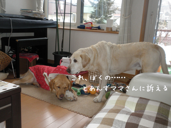 anzumaru1_20121205174028.jpg