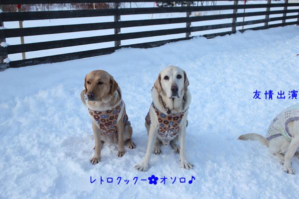 anzumaru_20121213213336.jpg