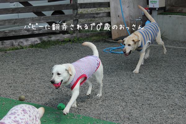 aromamaru_20120510211933.jpg