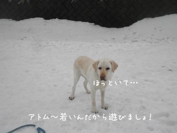 atomu_20130318212700.jpg