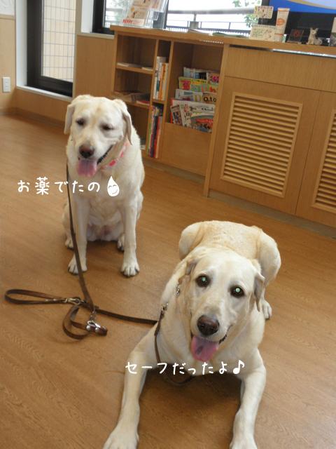 b1_20120921203004.jpg
