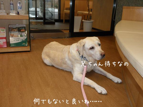 b1_20121204193359.jpg