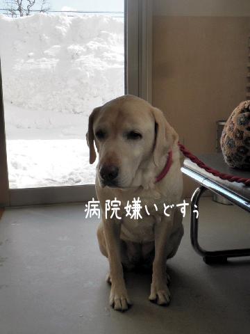 b1_20130311220309.jpg