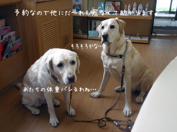 b2_20120426222441.jpg