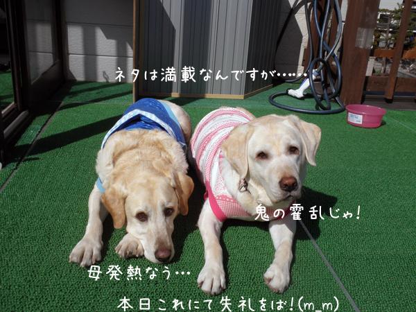 baru1_20120427193859.jpg