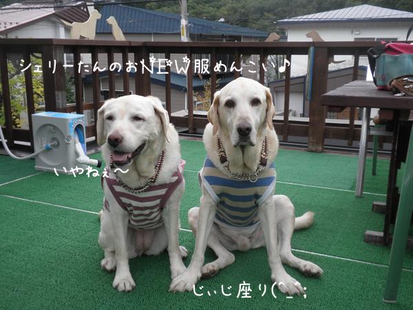 baru1_20121003222859.jpg