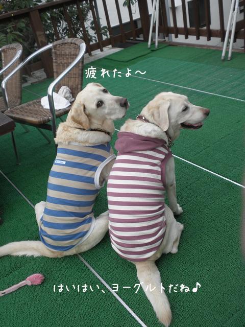 baru2_20121003222858.jpg