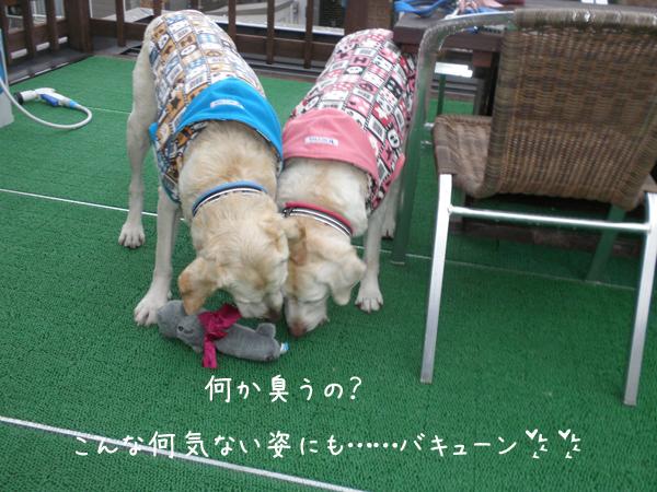 baru2_20121011202021.jpg