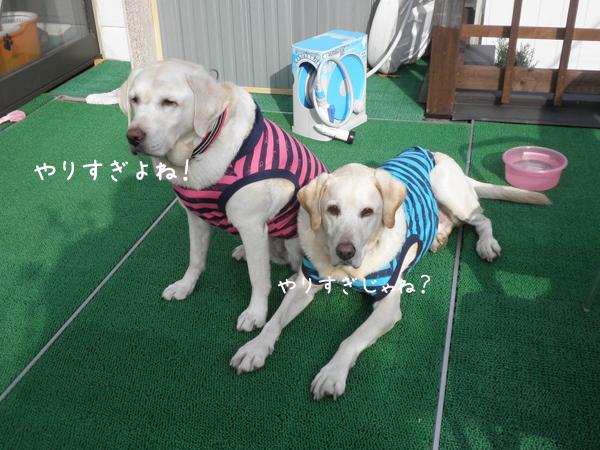 baru2_20121113220708.jpg