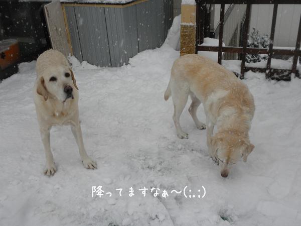 baru_20121211195500.jpg