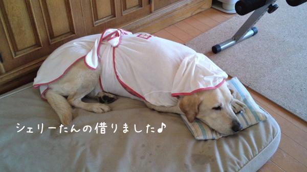 basumaru_20120626191035.jpg