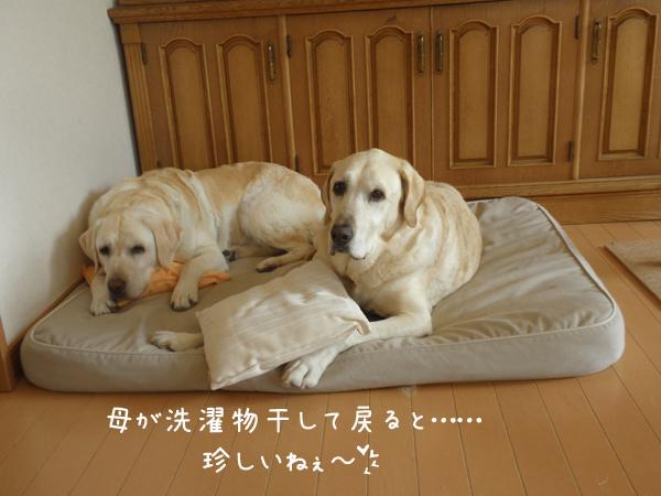 bed1_20120713212930.jpg