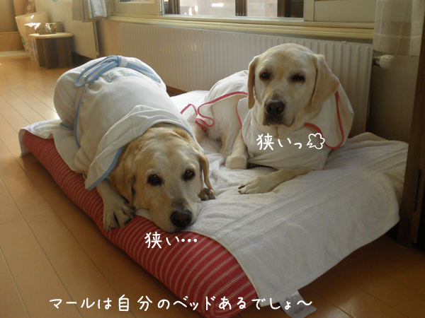 bed1_20120807190338.jpg