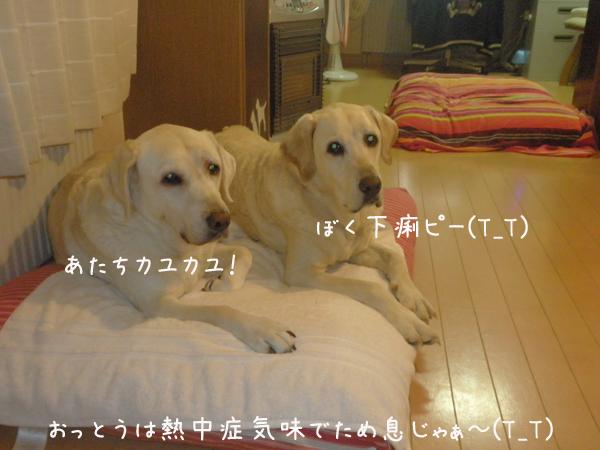 bed1_20120820225615.jpg