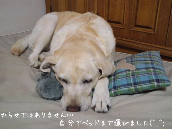 bed1_20121024224242.jpg