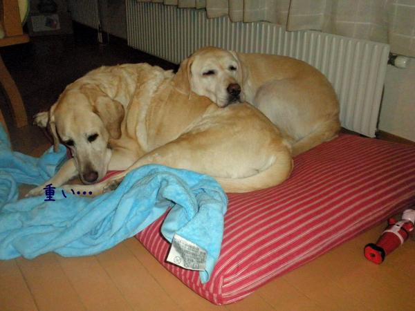 bed1_20130202215927.jpg