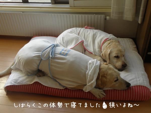 bed2_20120807190338.jpg