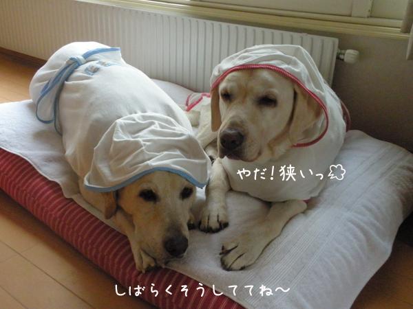 bed2_20120819171416.jpg