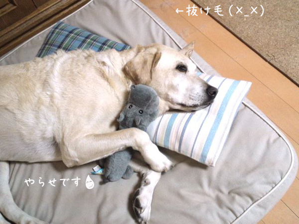 bed2_20121024230707.jpg