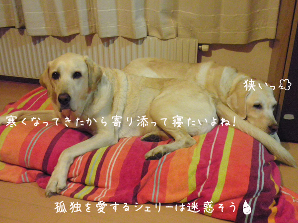 bed_20121001192816.jpg