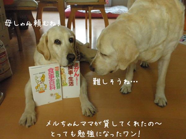 book_20120729213451.jpg