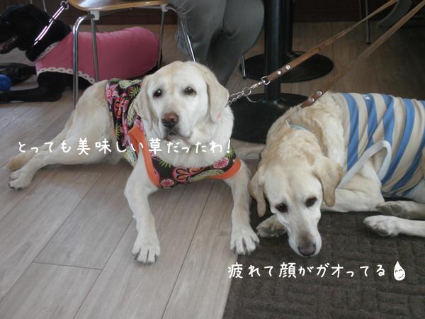 cafe1_20120603221402.jpg