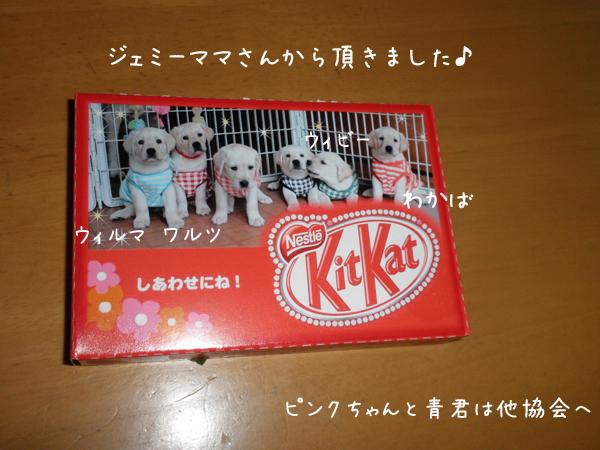 choko_20120912200506.jpg