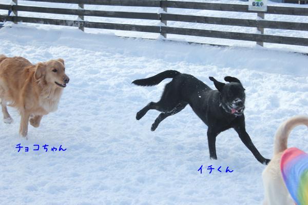 choko_20121213213344.jpg