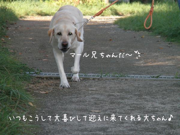 dai1_20121002205439.jpg