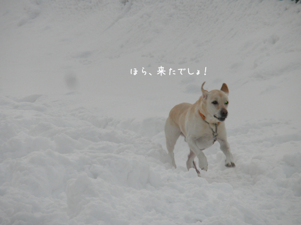 dai1_20121215214230.jpg