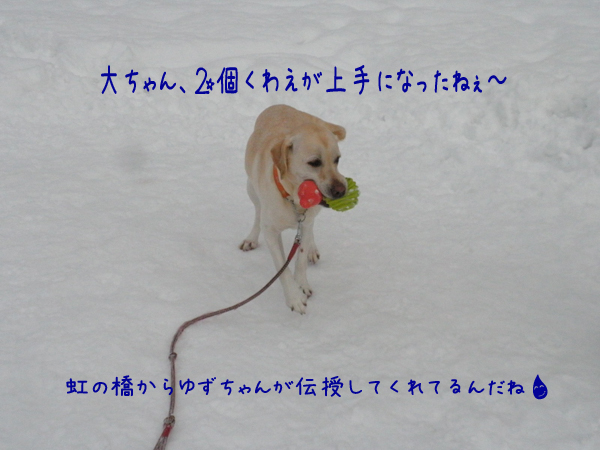 dai2_20121216211808.jpg