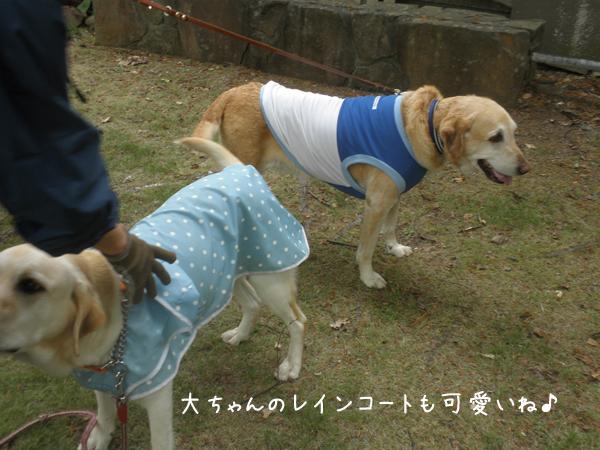 dai_20120601210649.jpg